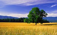 HDTV Widescreen Wallpapers of Beaitiful Nature (Vol.5)24 pics