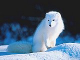 Wildlife Animals - Wild animal Wallpapers37 pics