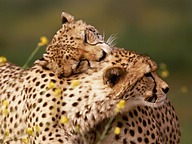 Tender moments : Animals in Love33 pics