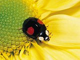 Close up Shot of Insects20 pics