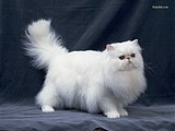 Loveable Domestic Cats collection90 pics