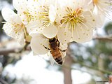 Insects and Bugs in Srping42 pics