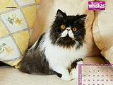 Lovely Kittens in Whiskas Ads34 pics