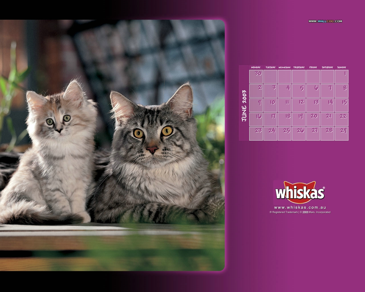 Whiskas Cat Food  Cute Kitten Desktop 1280x1024 NO15