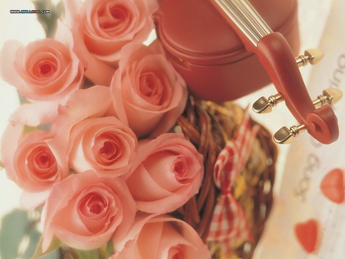 Day romantic pink roses pictures valentine s day rose flowers 13
