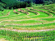 Beautiful Oyama Rice Terraces - Oyama Senmaida33 pics
