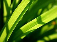 Vista Plants and Leaves series (Vol.12)31 pics