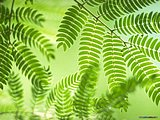 Lush Summer wallpaper - wonderful green nature wallpapers72 pics