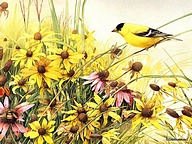Backyard Birds : Beautiful Birds Paintings11 pics