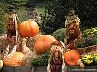 Autumn Display : Scarecrow & Pumpkins Wallpapers30 pics