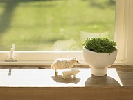 Interior Greenery & Herbs (Vol.01)46 pics